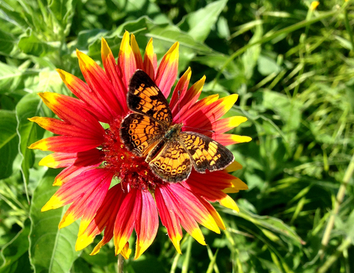 Go on a nature walk to spot insects and more