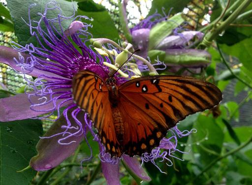Take an Evening Stroll through Butterfly Garden