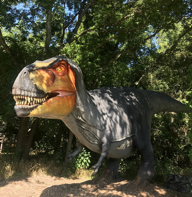 Tyrannosaurus rex at the Heard Museum