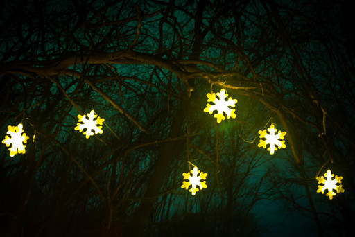 Holiday lights and décor accentuate nature trail
