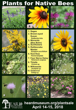 Plants to support our native bees