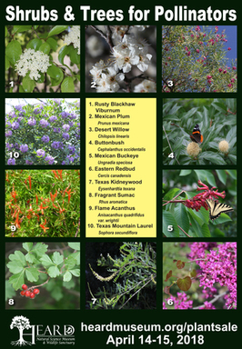 Shrubs and Trees for Pollinators