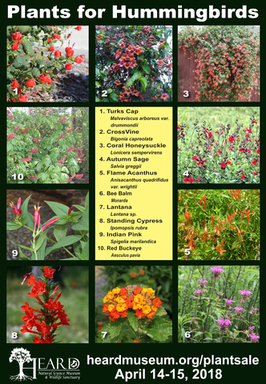 Nectar Sources for Hummingbirds